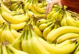 قیمت انواع میوه در بازار / موز ارزان شد