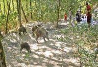 نسخه حفاظت برای پارک ملی گلستان