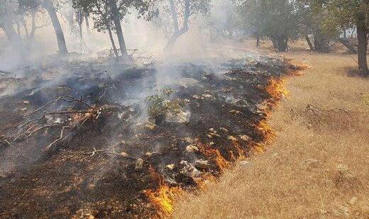 مهر آتشسوزی جنگلهای «شبلیز» شهرستان دنا