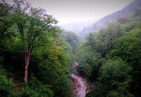 آخرین  وضعیت مالکیت جنگل های آقمشهد ساری و دماوند