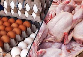 واردات مرغ و تخممرغ برای تنظیم بازار