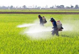 سموم پرخطر از سبد مصرف کشاورزان حذف می شود