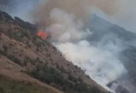 جنگلهای گالیکش دچار آتشسوزی شد