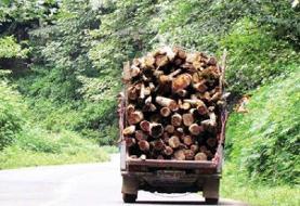 کشف ۴۸ تُن چوب و زغال بلوط/ آتشسوزی در جنگلهای اصفهان نداشتیم