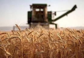 هشدار نسبت به بحران آرد و نان