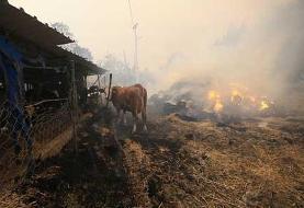 ۴ کشته و ۱۸۰ زخمی بر اثر آتش سوزی جنگلها در ترکیه