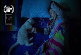 گربههای ایرانی راهی آمریکا شد