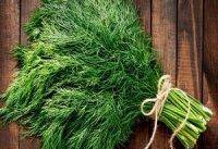شوید: از محتوای تغذیه ای تا مکمل های دارویی این گیاه شگفت انگیز