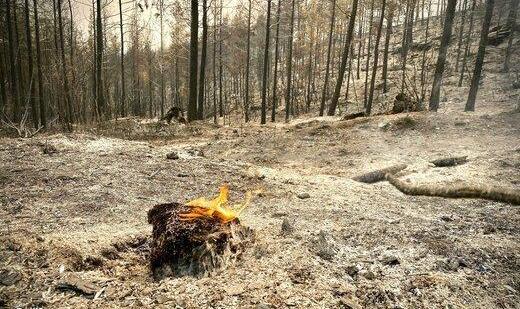 مهار آتش در جنگلهای شهرستان فیروزآباد/ ۳ نفر جان خود را از دست دادند