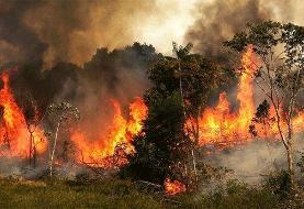 آتشسوزی عمدی در جنگلهای کهگیلویه و بویراحمد