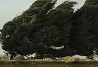 وزش باد و رعد و برق در برخی از استانها