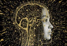 دو عملکرد مغز که با افزایش سن تقویت میشوند