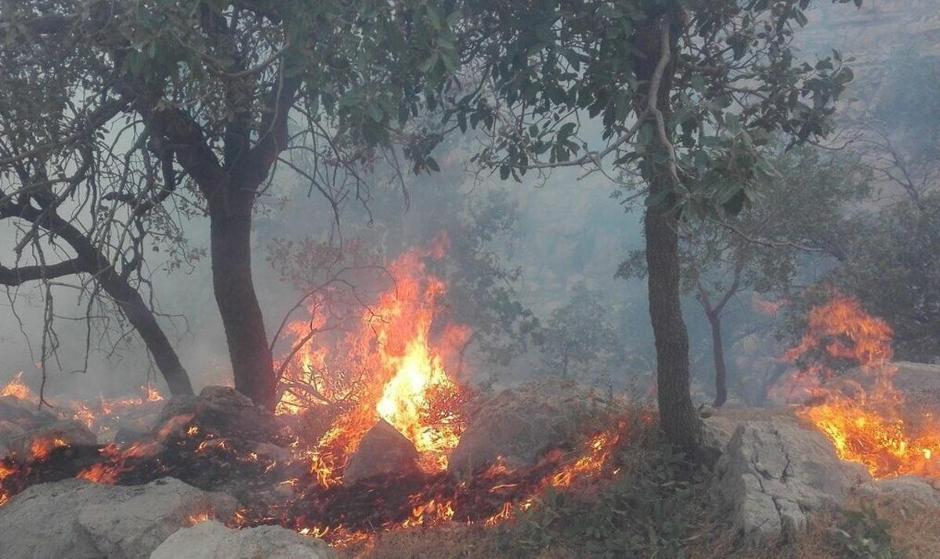 آتش در جنگلهای کوه نیر کهگیلویه و بویراحمد دوباره زبانه کشید