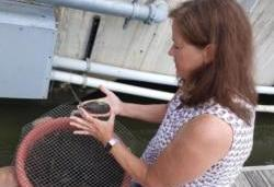تلاش کارشناسان محیط زیست برای بهبود کیفیت آب رودخانه پوتومک در نزدیکی پایتخت آمریکا