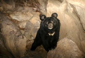مرگ خرس کمیاب بلوچی در باغوحش دانشگاه زابل
