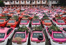 ببینید   تبدیل تاکسیها به باغچه سبزیجات در بانکوک