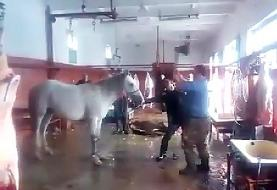 تصاویر   بازداشت عامل ذبح و توزیع گوشت الاغ و اسب در تهران   ۵۰۰ کیلو گوشت غیرمجاز معدوم شد