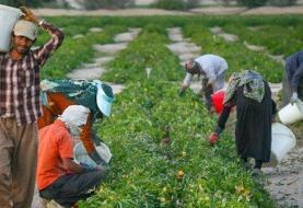 درخواست بررسی مصوبه &#۳۴;تقویت پشتیبانی و رفع موانع تولیدات کشاورزی&#۳۴; و خودداری از تایید آن