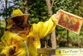 افتتاح هتل برای زنبورها!