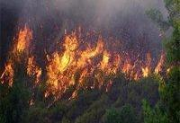 قاچاقچیان چوب جنگل&#۸۲۰۴;های هیرکانی کردکوی را آتش زدند